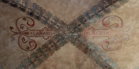 canabis-protectio
